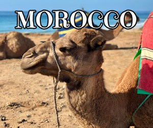 Tui Morrocco Late Deals